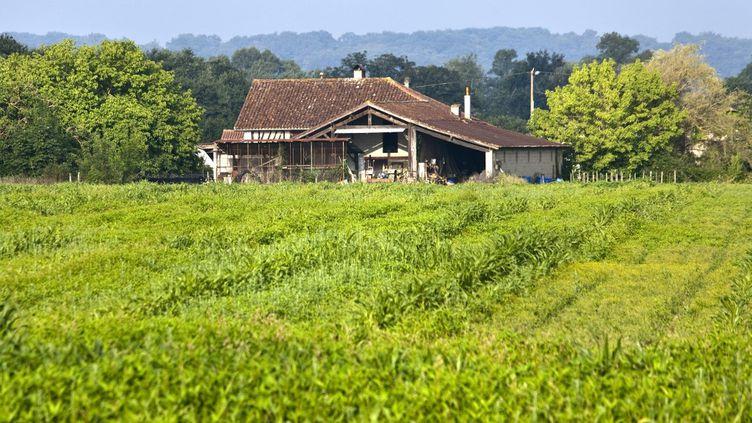 Un champ de maïs à Aire-sur-l'Adour (Landes), le 4 septembre 2019. (PHILIPPE ROY / AFP)