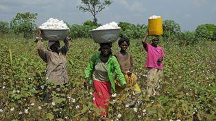 Des Togolaises récoltent le coton. (BEATRICE MOLLARET / PHOTONONSTOP)