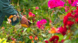 Dans les jardins suspendus au Havre (Seine-Maritime), plus de 5 000 plantes et fleurs s'épanouissent sur sept hectares. Une trentaine de jardiniers en prennent soin. (France 3)