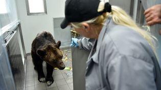 L'ours Mischa, mort le 12 novembre, avait été placé au zoo-refuge La Tanière (Eure-et-Loir). (QUENTIN REIX / MAXPPP)