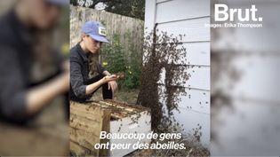 """VIDEO. """"Nous dépendons tellement d'elles"""" : elle consacre sa vie au sauvetage des abeilles (BRUT)"""