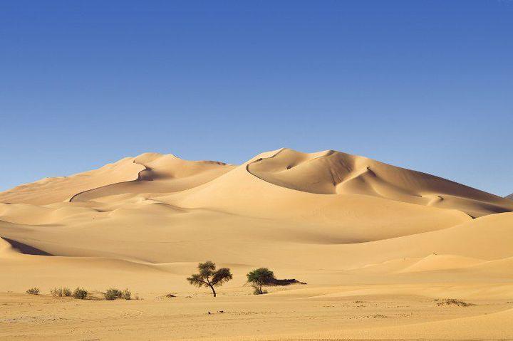 Désert libyen (Biosphoto / Minden Pictures / Konrad Wothe)