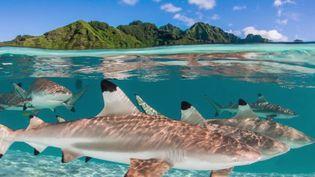 Hawaï : à la découverte de la photographe Renée Capozzola (France 2)