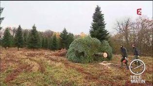Le sapin de Noël de l'Elysée vient du Morvan (FRANCE 2)