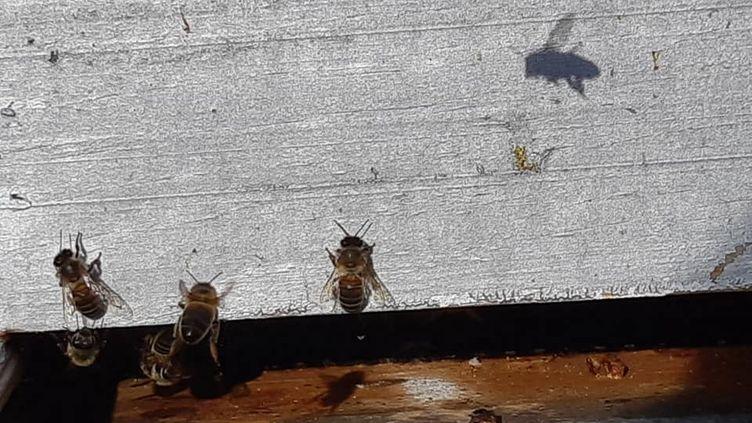 Des abeilles sur une ruche. (Illustration). (VALÉRIE MENUT / FRANCE-BLEU PAYS BASQUE)
