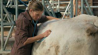 """""""Les Vétos"""", le premier film de Julie Manoukian, sort mercredi 1er janvier 2020 en salles. C'est un portrait sensible au cœur de la ruralité sur la profession de vétérinaire. Des héros discrets à l'écoute du monde rural. (Copyright 2018 – LES FILMS DU 24 – FRANCE 3 CINEMA - Roger DO MINH)"""