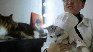 En Asie, le chat est aussi un animal sacré. (CAPTURE ECRAN FRANCE 2)