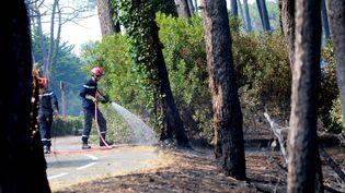 Des pompiers s'affairent dans la forêt du Pignada, à Anglet (Pyrénées-Atlantiques), le 31 juillet 2020. (MAXPPP)