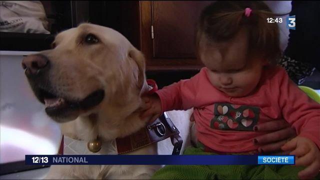Handicap : une petite fille aveugle de 17 mois a déjà son chien-guide