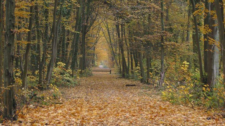 La forêt de Sénart (Essonne et Seine-et-Marne), où un homme est soupçonné d'avoir perpétré une trentaine de viols ou tentatives entre 1995 et 2001. (DIDIER SEMENT / BIOSPHOTO / AFP)