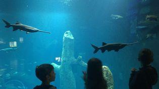 Ariel, Héloise et Zachary explorent AQUATIS, le plus grand aquarium d'eau douce d'Europe, à Lausanne. (INGRID POHU / RADIO FRANCE)