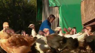 La Confédération paysanne a exprimé sa colère et son inquiétude alors que dans les zones à risque pour la grippe aviaire, les éleveurs de plein air ont l'obligation d'enfermer les volailles. (CAPTURE ECRAN FRANCE 2)