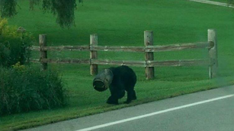 Capture d'écran d'une vidéo postée sur YouTube montrant la façon dont un ours avec un étrange objet sur la tête a été libéré àPerry Township (Pennsylvanie, Etats-Unis). ( YOUTUBE / FRANCETV INFO )