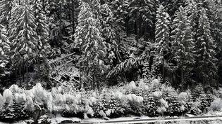 Des sapins enneigés dans les Vosges, le 1er février 2018. (MAXPPP)