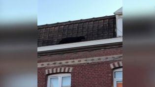 Une panhtère noire a été capturée par les pompiers alors qu'elle arpentait les toits d'Armentières (Nord). (france 3)