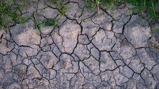 De la terre asséchée, à Roncq (Nord), le 29 juin 2019. (MAXPPP)