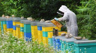 Un apiculteur s'occupe de ses ruches, à Ploerdut (Morbihan), le 19 juin 2018. (FRED TANNEAU / AFP)