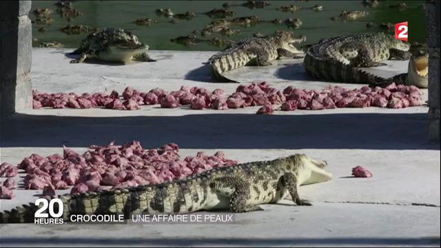 Crocodiles : une affaire de viandes et de peaux