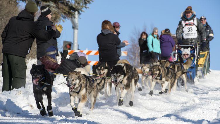 Le départ du 45e trail Iditarod de chiens de traîneaux en Alaska, à Anchorage, le 4 mars 2017. (ALEJANDRO PEÑA)