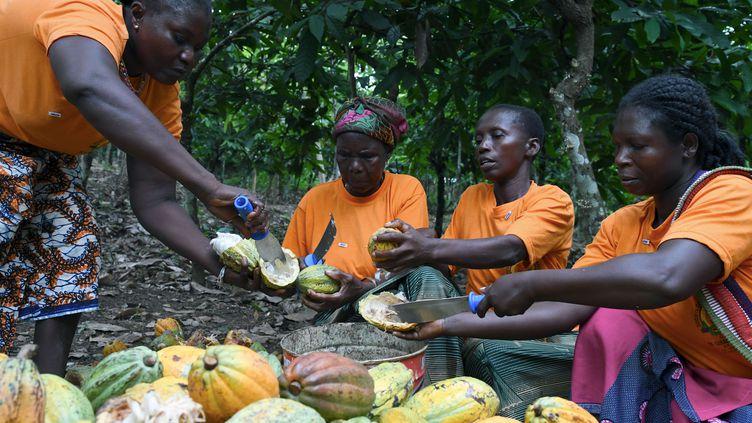 Des femmes, membres d'une coopérative agricole, cassent des cabosses de cacao, le 17 avril 2019, dans une ferme près d'Adzope, dans le sud de la Côte d'Ivoire. (ISSOUF SANOGO / AFP)