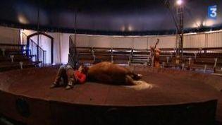 """""""Le sort du dedans"""", spectacle de cirque équestre  (Culturebox)"""