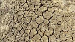 Les premiers effets de la sécheresse sont attendus d'ici la fin juin, principalement dans l'est de la France. (NOÉMIE GUILLOTIN / FRANCE-BLEU POITOU)