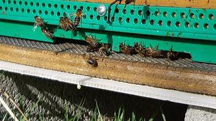 Les abeilles sont des maillons indispensables à la biodiversité. (VALÉRIE MENUT / RADIO FRANCE)