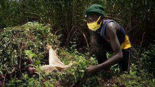 Ellie Niyomugabo, 15 ans, coupe de l'herbe et fait des sacs de fourrage pour quelques euros par mois. (SIMON WOHLFAHRT / AFP)