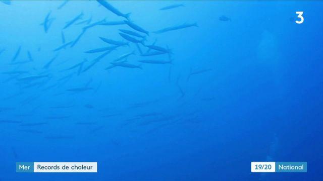 Environnement : avec la canicule, des records de chaleur observés en mer