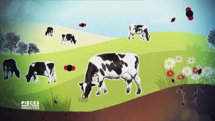 """Non, les vaches au pré ne polluent pas forcément, et """"Pièces à conviction"""" explique pourquoi (PIÈCES A CONVICTION / FRANCE 3)"""