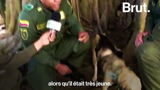 Brut : chien/capucin