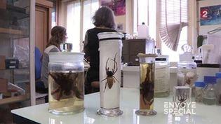 "Envoyé spécial. Apprivoiser sa phobie avec ""Madame Araignée"" (ENVOYÉ SPÉCIAL  / FRANCE 2)"