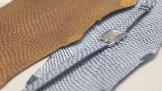 Innovation : des cuirs créés à partir de peaux de poisson (FRANCE 3)