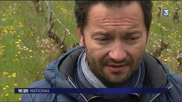 Gelées noires : des vignobles ravagés