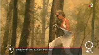 Une Australienne sauve un koala des flammes (France 2)