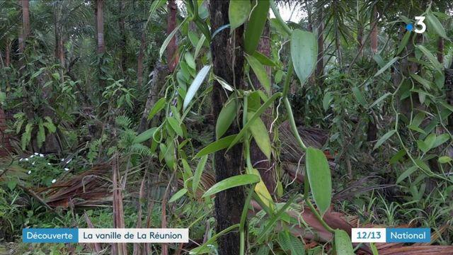 Île de la Réunion : des Ardennes à la production de vanille