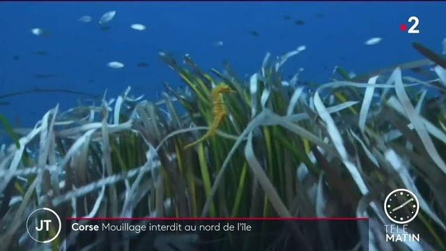 Corse: pour sauver les posidonies, le mouillage interdit aux yachts au nord de l'île