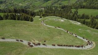 Haute-Savoie : l'heure de la transhumance pour les vaches laitières (France 2)