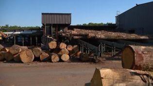 Les industriels du bois lancent une grande pétition pour sauver la scierie française. La France exporte son bois vers la Chine, et par conséquent, les scieries s'inquiètent pour leur avenir. (CAPTURE ECRAN FRANCE 2)