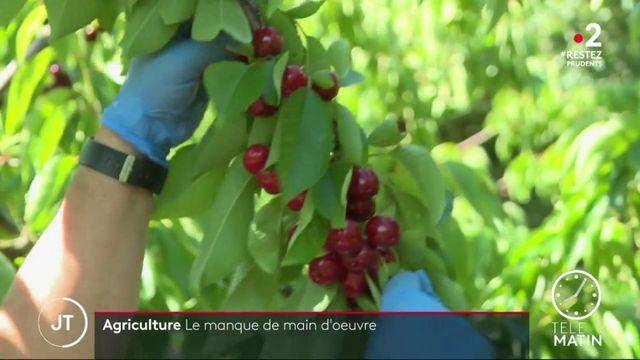 Coronavirus : le problème de la main d'oeuvre inquiète les agriculteurs du Vaucluse