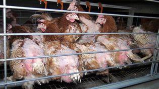 Des poulets en batterie, dans une ferme vendéenne, le 30 avril 2017. (L214 - ETHIQUE & ANIMAUX / AFP)