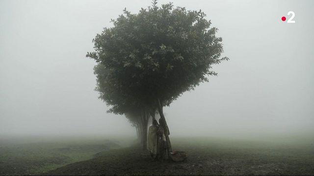 Photo Hebdo : des femmes fuient l'Ethiopie, parapluies colorés au Kosovo et des cochons so British en Angleterre