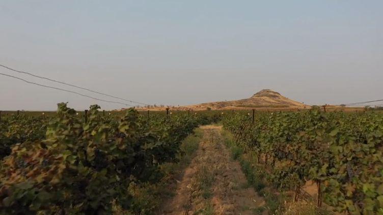 L'Inde produit de plus en plus de vin, et certains sont réputés. Les Indiens s'y intéressent également davantage. (CAPTURE ECRAN FRANCE 3)