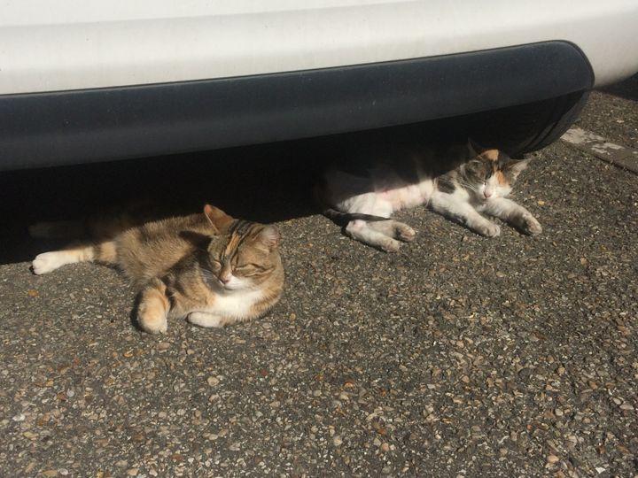 Deux chats sous la chaleur de Moret-sur-Loing. (ARIANE GRIESSEL / RADIO FRANCE)
