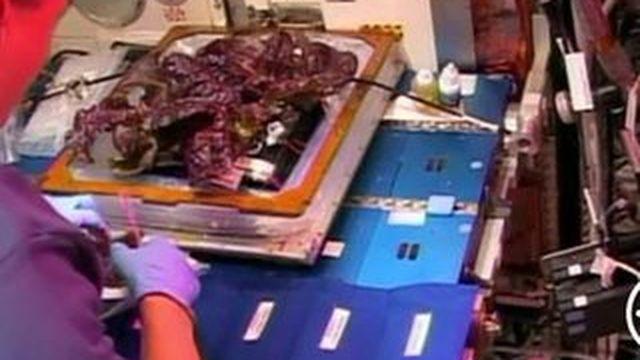 Des astronautes goûtent la première laitue cultivée dans l'espace