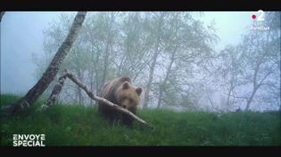 L'ours de la discorde (ENVOYÉ SPÉCIAL  / FRANCE 2)