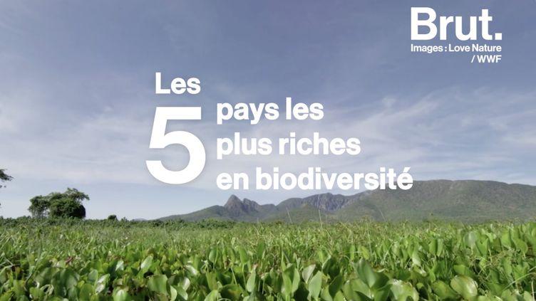 VIDEO. De l'Indonésie au Brésil, les cinq pays les plus riches en biodiversité (BRUT)