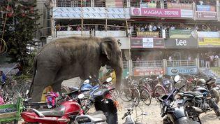 Un éléphant sauvage se déplace à travers une rue à Siliguri, en Inde, le 10 Février 2016. (REUTERS)