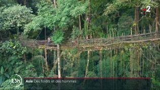 Les forêts asiatiques regorgent d'une faune et d'une flore exceptionnelle. Souvent protégées, elles sont aussi mises en danger par l'homme. (France 2)