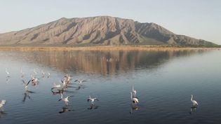 Kenya : le niveau du lac Natron a rarement été aussi élevé (France 2)